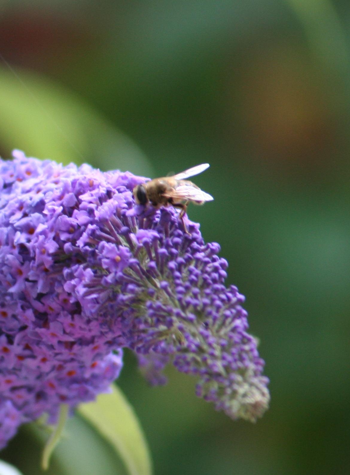 Bienenvolkpatenschaft auf Gut Dietlhofen