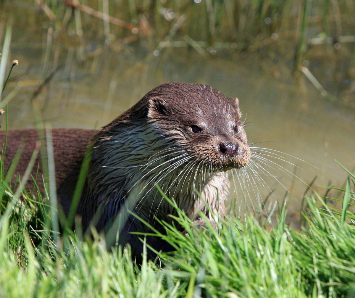 Das Team von MP setzt seine Tierpatenschaften im Wildpark Eekholt fort!
